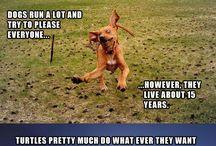 funny and cute stuff :D