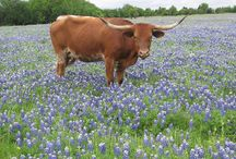 Texas awesomeness! / by Tanni Williamson