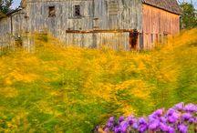 Barns / by Becky Clontz