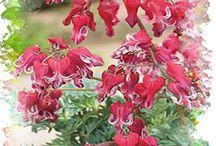 Hosta Bed Plants / by Deb Snyder