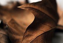 •• Autumn ••
