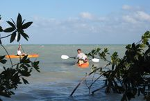 Day Trippin' in Northern Belize / What you can do while you stay at Serenity Sands