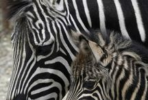 Cuteness Overloaded Newborn Animals