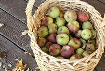 Harvest / Preserving Fruits&Berries
