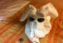 Towel Animals / Cruise lines have become famous for creating cute, playful towel animals out of yes, as you guessed, bath towels.  #towelanimals #cruiseships #cruisevacation