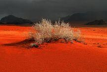 Desert whispers - Sussurri del deserto
