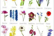 Dream Gardens / Beautiful gardens