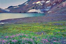 Oregon / by Amanda Morgan