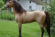horse / by Keisha George
