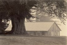 Barns of Sea Ranch and Mendonoma Region / A collection of #barns along the #Mendonoma Area- 100 miles of coast line between #Mendocino and #Sonoma Counties Many are seen along the way to #AbaloneBay #VacationRental in #SeaRanch http://www.searanchabalonebay.com/