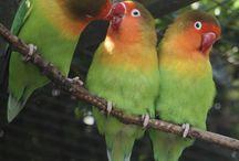 Le parc des oiseaux / Un lieu aux multiples couleurs
