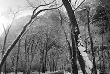 Seasons - Winter moodboard