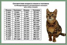 кошка в семье / полезное для кошек и их хозяев