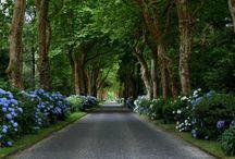 Beautiful Driveways