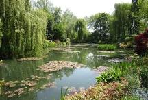 Gardening - Water Gardening