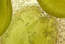 Pulpe ou fruit