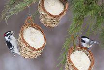 lintujen ruokinta