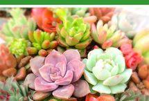 colorear plantas