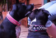 Lara and Lexie wearing our Collars