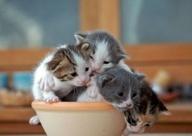 kittens en katten