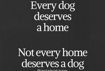 Dog Quotes / Dog quotes, sayings, and dog training tips. Follow our Facebook page at https://www.facebook.com/mightydogtraining