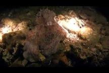 Diving Videos