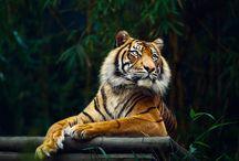 Animals / by Lori Zimmerman