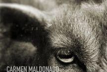 Carmen Maldonado / http://photoboite.com/3030/2011/carmen-maldonado/