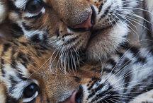 zvířata foto