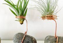 rostliny dekorace