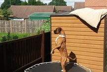 PEEPING TOM! And he's still got good balance on a trampoline. / I love to snoop!