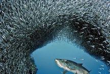 ryby, moře, lodě