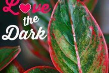 planter som liker mørke