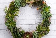 Grapevine and Floral Projects / by Pat Catan's
