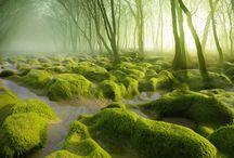 Nature / Scenery