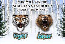 Tiger vs Bear Siberian Standoff video slot / Tiger vs Bear Siberian Standoff offers two features: Tiger Free Spins Feature and Bear Claw Feature.