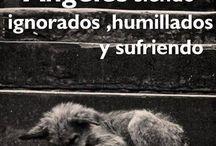 No los ABANDONES :( / como la gente abandona los perros la gente no se da cuenta que solo son cachorros queriendo una familia con quien no la abandone y sea feliz. Tanto cuesta nose ponerle una caja o un tarro de agua miles de personas abandonan perros como si fuera basura gente abran los ojos si no pueden tenerlo solo agarrelo y llevelo a un veterinario o a u  refugio pero NO LOS ABANDONEN son indefensos es imprecionante como la gente mira solo a los perros de raza.No abandones a los perros ellos  tambien sufren.