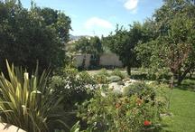 """Casa Larga / Alojamiento Rural """"Casa Larga"""" en Melegís (Granada) Un pequeño paraíso por descubrir en el pueblo de Melegís. Un vergel de naranjos y limoneros apartado del ruido y la contaminación para que solo tengas que preocuparte de disfrutar. Así es Casa Larga, una antigua casa de pueblo restaurada con muy buen gusto y con todas las comodidades necesarias. Tienen la ventaja de tenerlo todo cerca porque está en mitad de pueblo."""