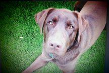 Szkolenie psów / Szkolenie psów czasami fajnie można połączyć z fotografią :)