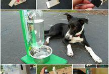 praktisches für Hunde