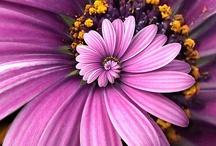 Flowers, fleurs, couleur pour le coeur et l'âme, se sentir en vie! / Des fleurs, de belles couleurs, joie de vivre!  Nourriture pour le coeur et l'âme! Quand je vois une fleur je souris à l'intérieur, ça m'enchante, je me sens en vie! Ma fleur préférée l'orchidée et vous?