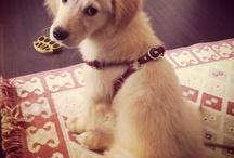 Mila the dog