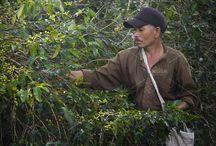 coffee farmers by bastera on @creativemarket
