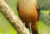 Amazing Birdies