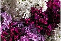 Flowers & Gardens / by Jody Prince