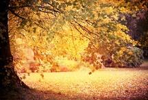 Autumn / by Karen Manders