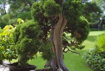 bonsai, ikebana, japanese garden,suiseki / by Andrea Habovchikova