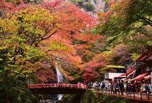 Traveling Japan