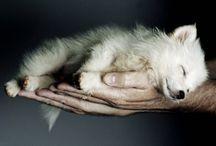 Cute Animals / by Katlyn Cottrell