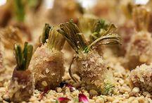 Comida de Rua / Menu inspirado nas comidinhas que todos os brasileiros adoram  e que agora podem encontrar nas festas, com um toque de requinte, é claro!